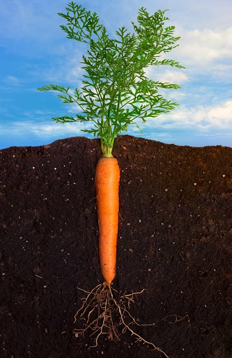KTN complaints are like a carrot